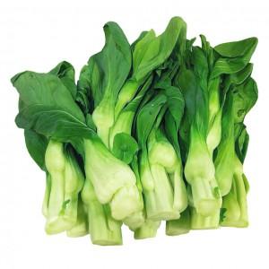 上海菜心-0