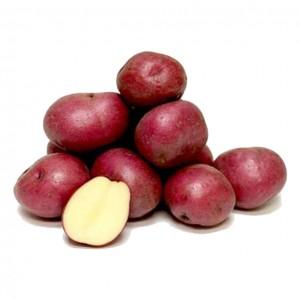 红土豆 0.9-1.1lbs-0