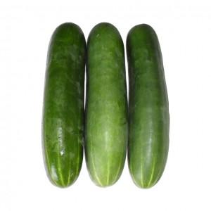 大黄瓜 1.4-1.6lbs-0