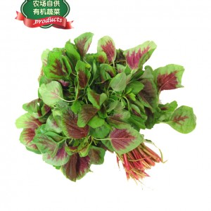 红苋苗(农场自供,有机蔬菜)-0