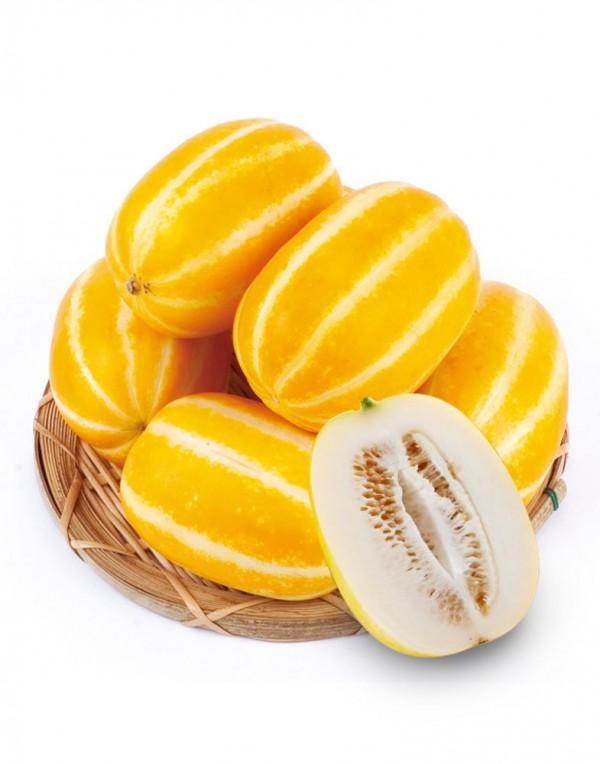 超大黄金瓜 -0