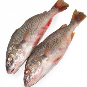 本地黄花鱼(黄鱼)-0