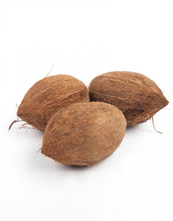 老椰子-0