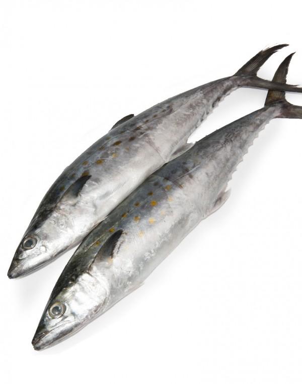 马鲛鱼(马交鱼)(鲭鱼)-0