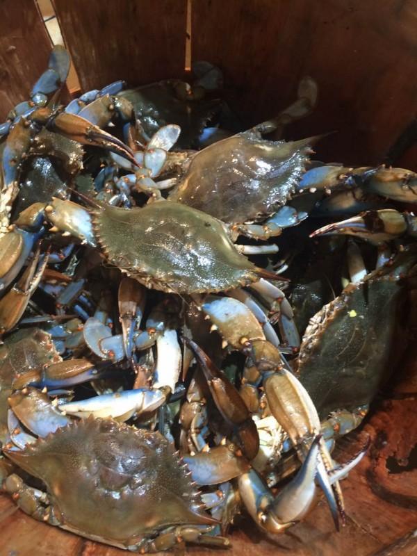 公蓝蟹-0